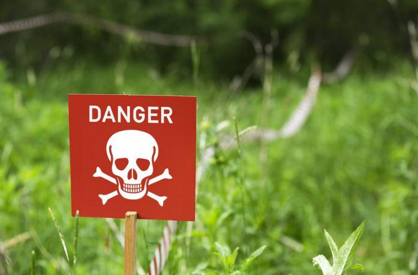 ۹ گیاه قاتل و خطرناک
