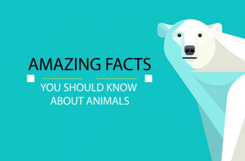 حقایق شگفتانگیز در مورد حیوانات