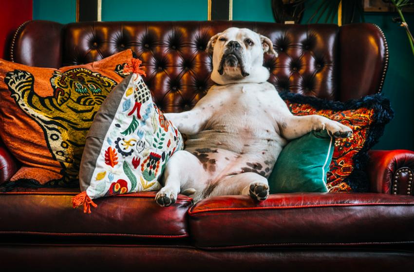 بهترین نژادهای سگ برای زندگی آپارتمانی