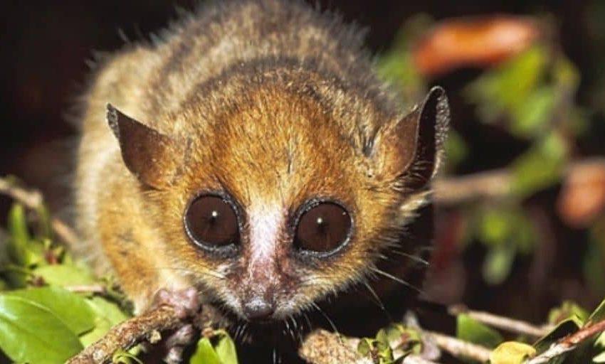 کوچکترین حیوانات دنیا