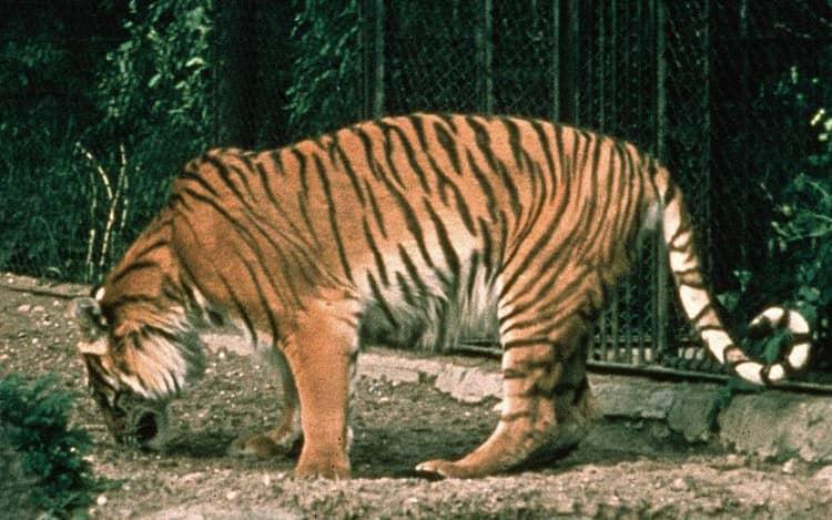 حیوانات منقرض شده ایران