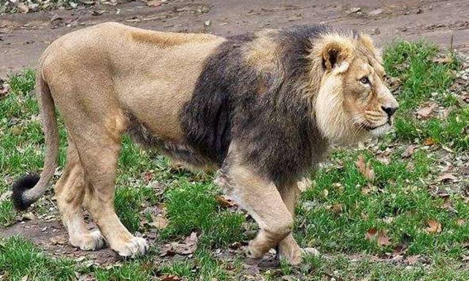 حیوانات منقرض شده و در خطر انقراض ایران را میشناسید؟