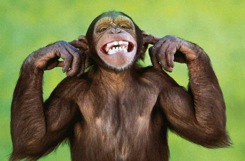 حقایقی درباره دندان حیوانات که جالب و بامزه هستند