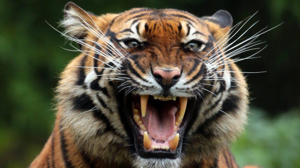 حقایقی درباره دندان حیوانات