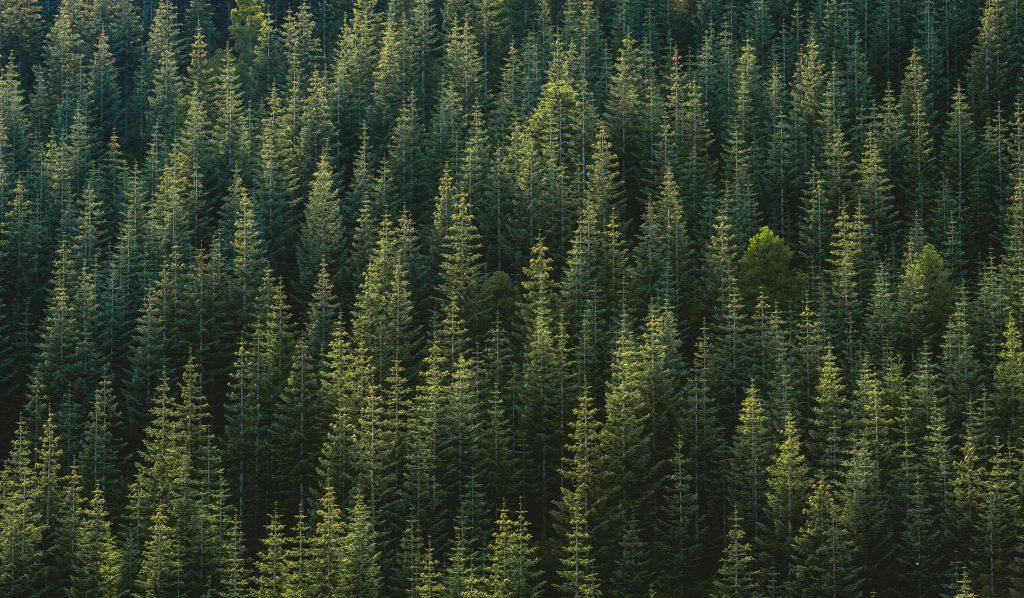 جنگل / درخت