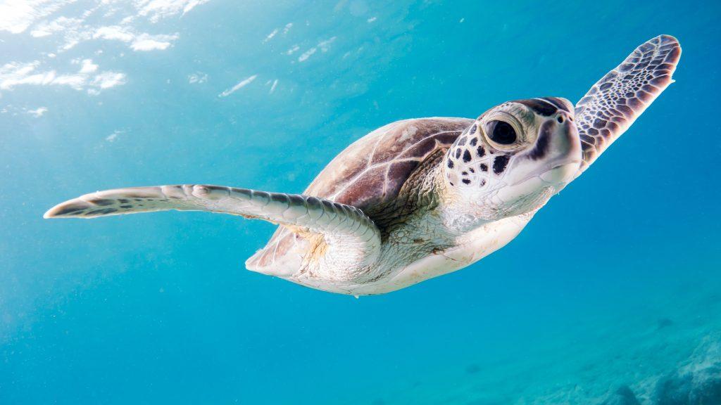 لاکپشت دریایی